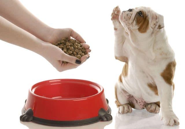 Bạn thích cho chó con nhà mình tẩy giun theo cách nào?