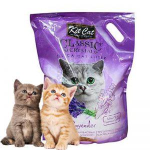 Cát thủy tinh cho mèo Kitcat