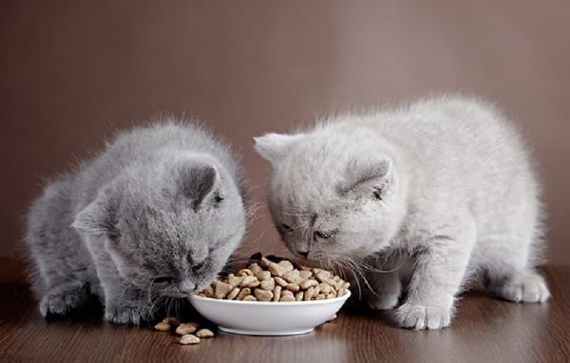 Chú ý đến khẩu vị của mèo khi mua thức ăn cho chúng