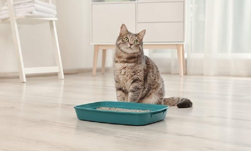 Phân loại cát vệ sinh cho mèo