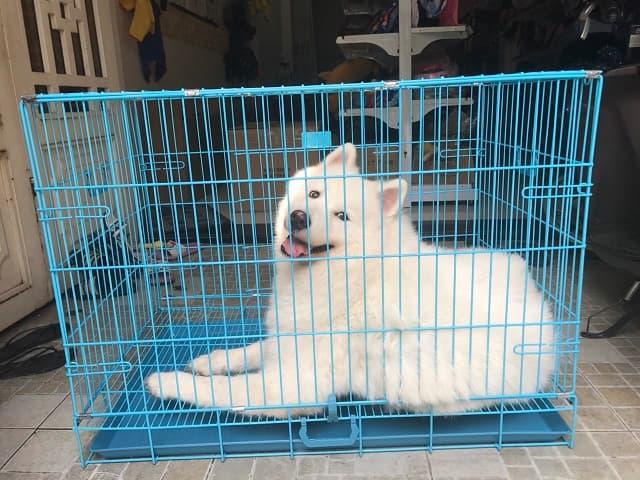 Sản phẩm nhà cho chó bằng chất liệu sắt sơn tĩnh điện là loại chuồng mới lạ trên thị trường hiện nay với nhiều ưu điểm vô cùng nổi bật