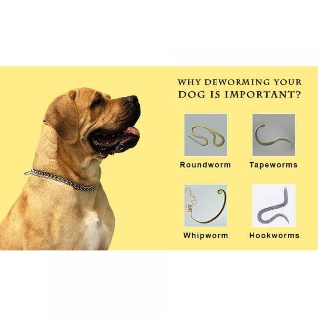 Theo bạn, nên sử dụng loại thuốc tẩy giun cho chó con nào là tốt nhất?