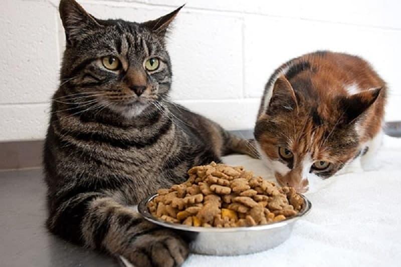 Vì sao nhiều người thường mua thức ăn cho mèo thay vì ăn cơm thường?