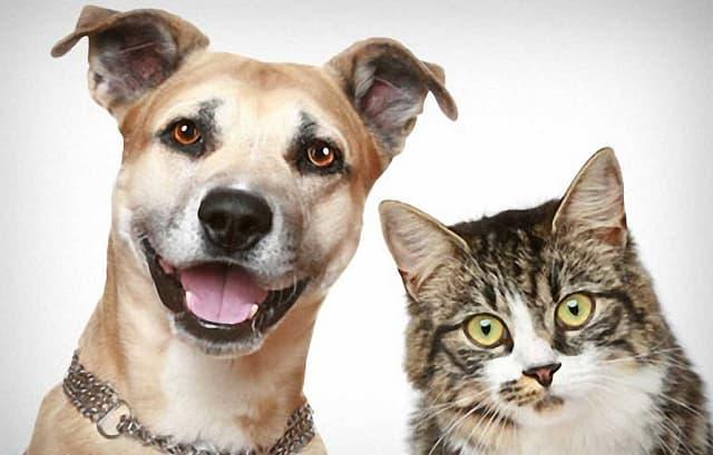 Các cửa hàng dành cho chó mèo xuất hiện ngày càng nhiều