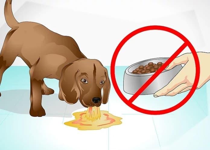 Cho chó ăn và uống thuốc gì khi bị tiêu chảy?