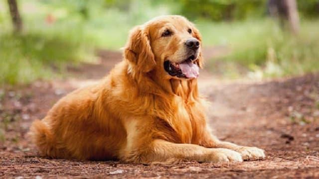 Chó là người bạn thân thiết và trung thành