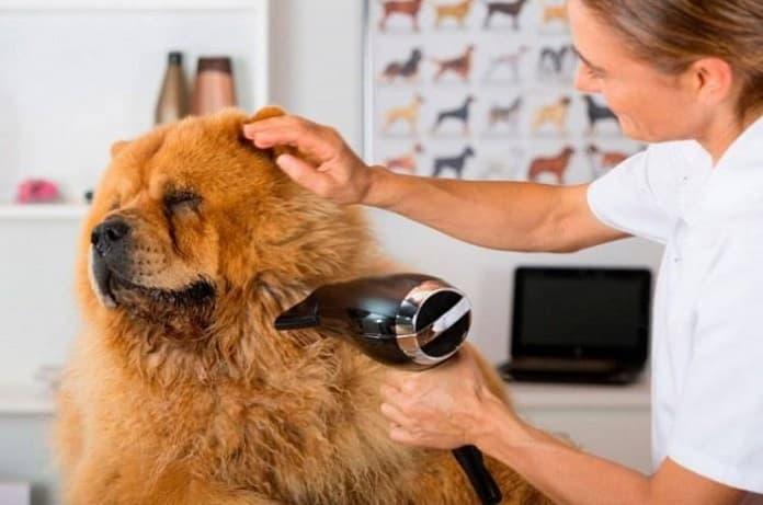 Dịch vụ cắt tỉa lông và Spa cho cún