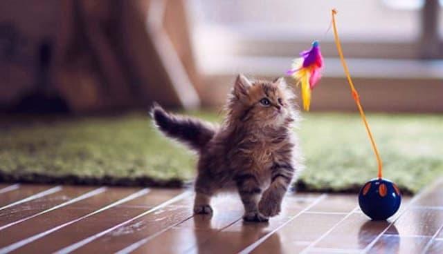 Đồ chơi cho mèo sẽ giúp các bạn mèo vận động nhiều hơn