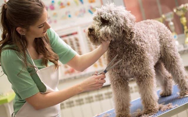 Hãy mang thú cưng đến spa chó mèo thường xuyên