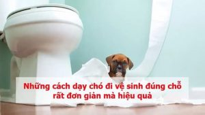 Hướng dẫn cách dạy chó đi vệ sinh đúng chỗ đơn giản nhất