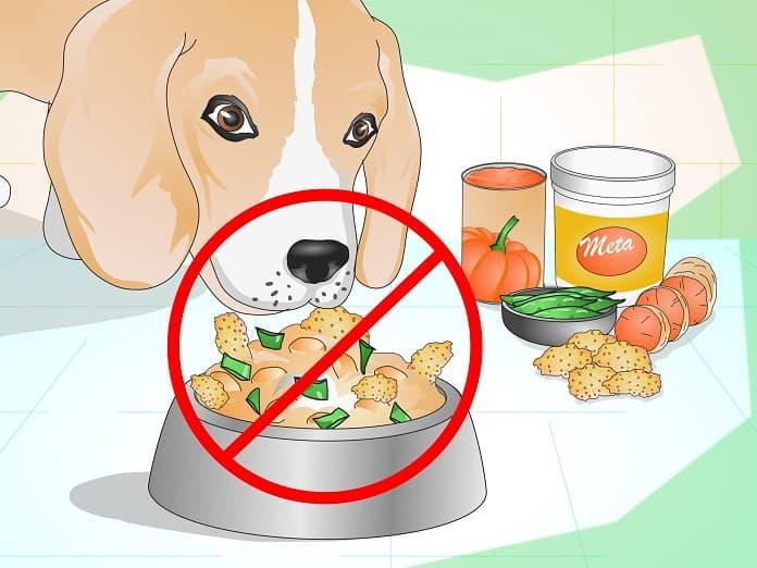 Hướng dẫn chăm sóc chó bị tiêu chảy
