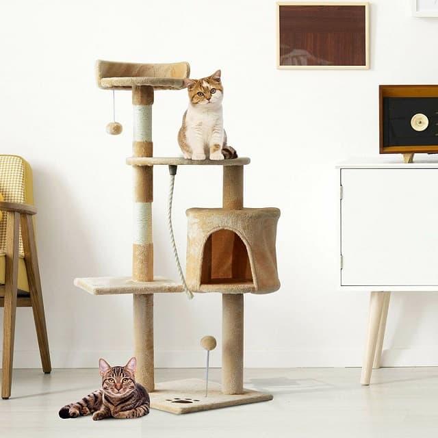 Không gian tập thể dục dành cho mèo cưng trở nên năng động, vui vẻ