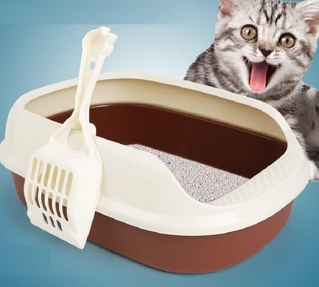 Nhà vệ sinh cho mèo dạng cơ bản