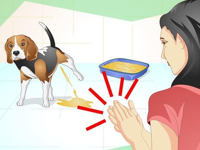 Nhờ người chăm sóc chú chó để hình thành thói quen