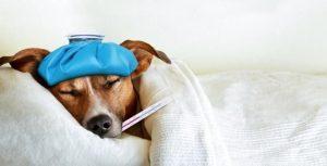 Triệu chứng chó bị tiêu chảy