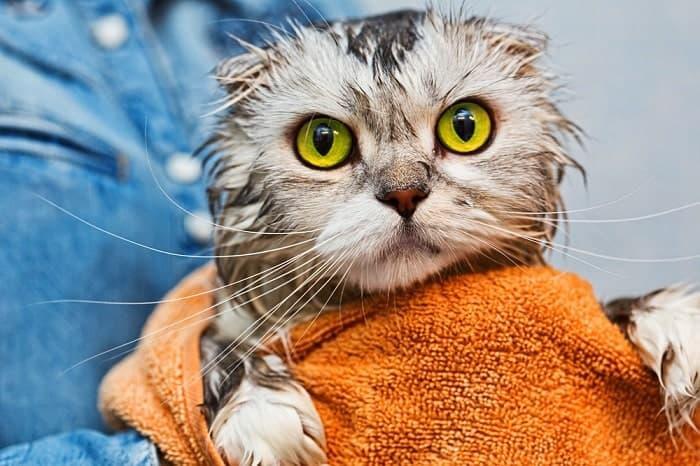 Bạn nên dùng một tấm khăn sạch và sấy khô ở nhiệt độ thấp nhất sau khi đã tắm xong cho boss