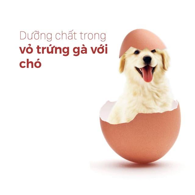 Bổ sung trứng luộc và vỏ trứng xay cho chó bổ sung canxi