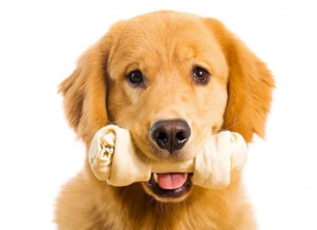 Cho chó gặm xương để giải quyết tình trạng đồ đạc trong nhà của bạn bị cắn phá hư hỏng