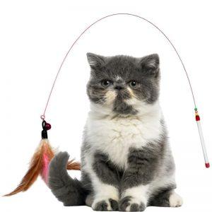 Đồ chơi Cần câu mèo dây sắt