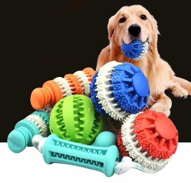 Đồ chơi cho chó mang đến nhiều lợi ích tuyệt vời