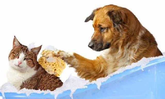 Dòng sữa tắm tích hợp cho nhiều dòng chó mèo khác nhau