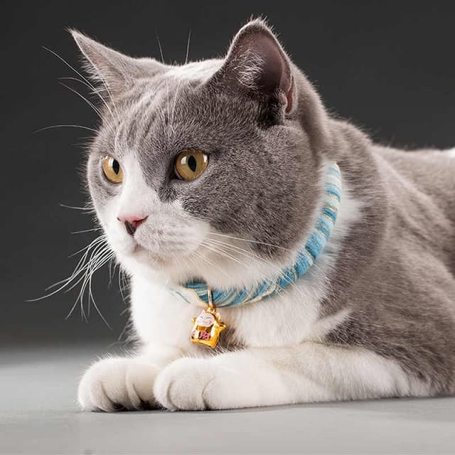 Lựa chọn những mẫu vòng cổ có chốt an toàn có thể giúp bảo vệ bé mèo tốt hơn khỏi những nguy hiểm khi đi rong chơi ở bên ngoài