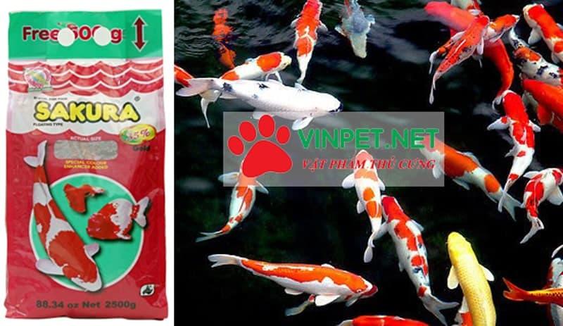 Liên hệ mua thức ăn cho cá koi sakura gold 35% đạm tại Hà Nội - 0942.778.463