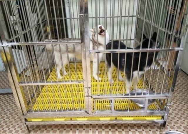 Tấm lót sàn chuồng chó có công dụng ngăn chặn sự tiếp xúc của cún cưng với thức ăn thiu, rơi vãi xuống sàn giúp hạn chế các bệnh về đường tiêu hóa.