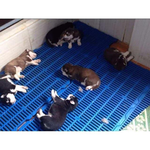 Thường xuyên vệ sinh và khử trùng sạch sẽ cho tấm lót sàn là việc rất cần thiết giúp bảo vệ cún cưng luôn khỏe mạnh, an toàn