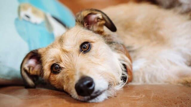 Việc thiếu hiểu biết trong việc tẩy giun cho chó có thể khiến chúng tử vong