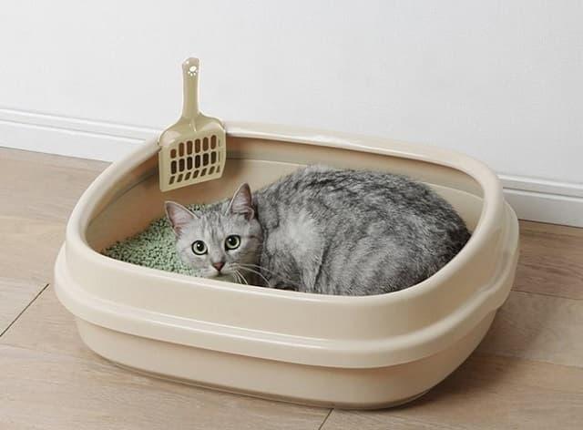Cách dọn dẹp khay vệ sinh cho mèo chuẩn nhất