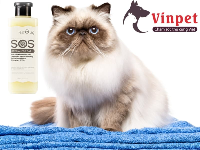 Cách tắm cho mèo Ba Tư hiệu quả