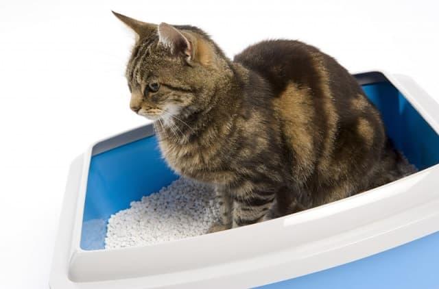 Chọn cát vệ sinh đáp ứng nhu cầu và sở thích của mèo cưng