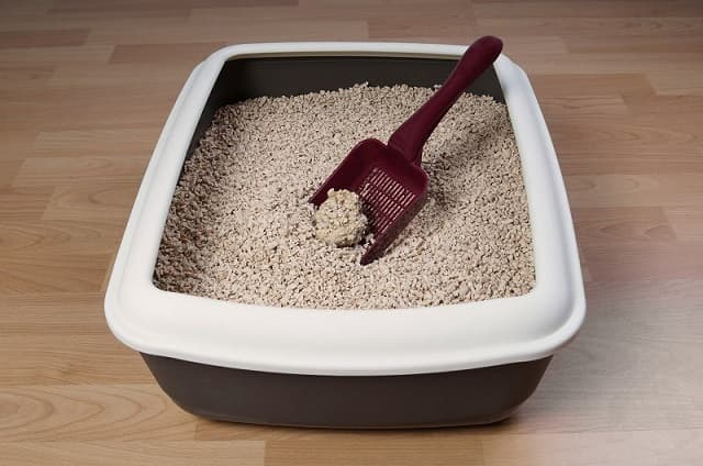 Chọn cát vệ sinh phù hợp với nhu cầu và sở thích của mèo cưng