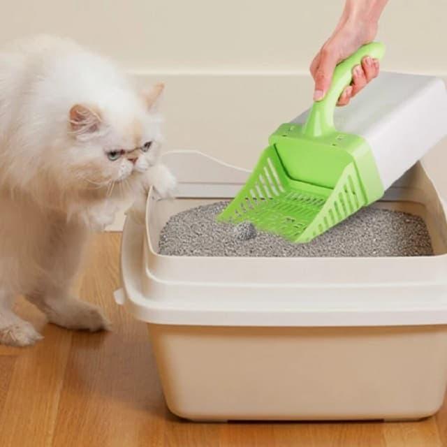 Cùng khám phá sản phẩm cát vệ sinh cho mèo loại nào tốt?