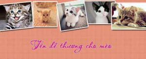 Đặt tên cho mèo để thể hiện sự yêu thương, quan tâm chúng mỗi khi gần gũi