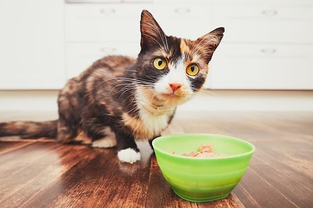 Kết hợp khẩu phần dinh dưỡng đáp ứng nhu cầu ăn uống hàng ngày của mèo cưng