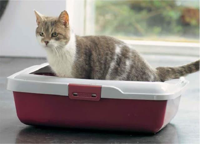 Khay vệ sinh cho mèo cần được dọn dẹp sạch sẽ mỗi tuần