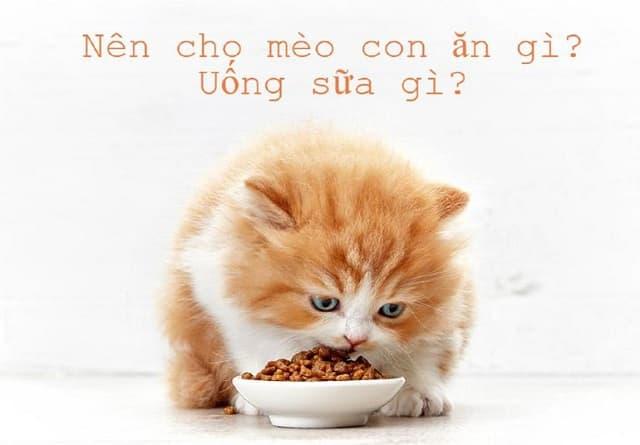 Loại thức ăn cho mèo con phù hợp và đầy đủ dinh dưỡng