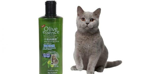 Lựa chọn đơn vị uy tín, đáng tin cậy khi đặt mua sữa tắm cho mèo olive essence