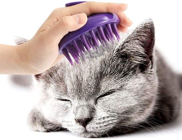 Lược chải lông giúp mèo có bộ lông mềm mượt