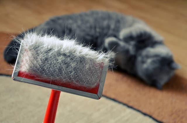 Lược chải lông rụng cho mèo