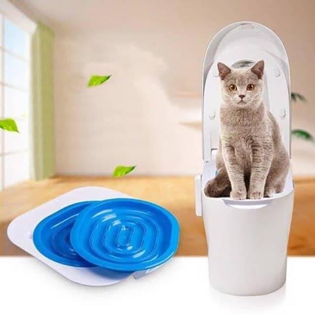 Mèo con cần được dạy đi vệ sinh đúng nơi đúng chỗ khi nuôi nhốt trong nhà