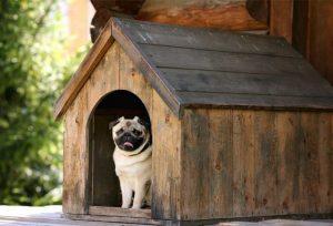 Nhà cho chó bằng gỗ