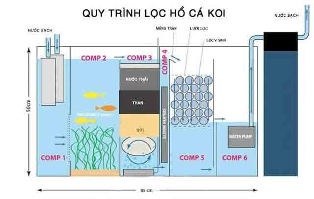 Quy trình lọc hồ cá Koi để đảm bảo nguồn nước trong sạch nhất