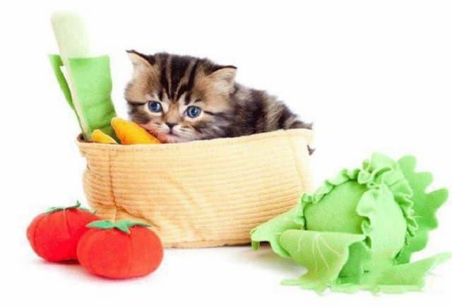 Rau củ giúp cải thiện hệ tiêu hóa và vitamin