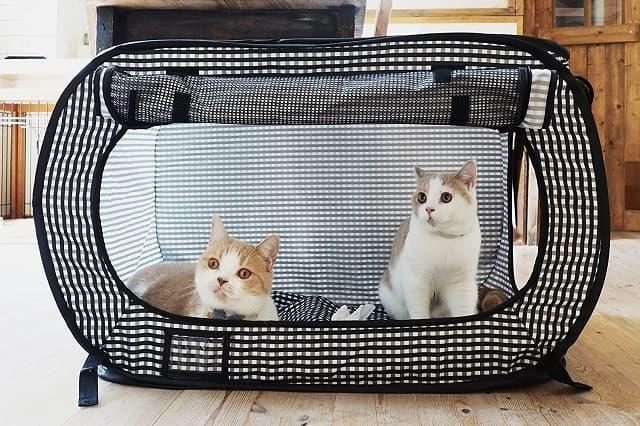 Tạo thói quen vào trong túi cho chó mèo