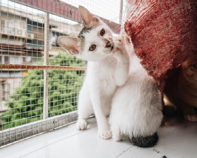 Tập cho mèo thích nghi với không gian sống trong chuồng