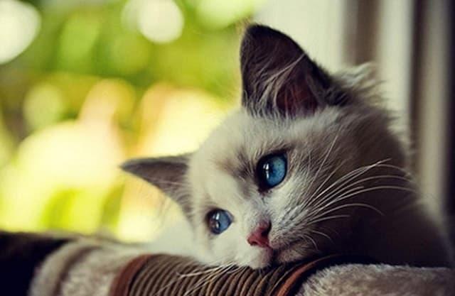 Tên hay dễ gọi, dễ nhớ cho những chú mèo khi sống với con sen