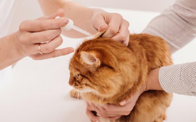 Thuốc nhỏ gáy cho mèo cần có trong tủ đồ phụ kiện dành cho thú cưng